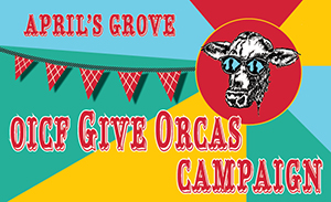 OICF special GiveOrcas campaign